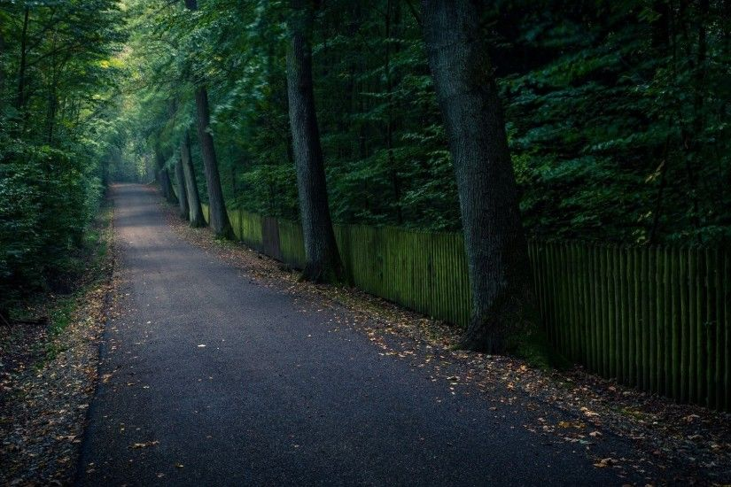 nature tree tree path track leaves leaves background trees leaves nature  wallpaper widescreen full screen widescreen