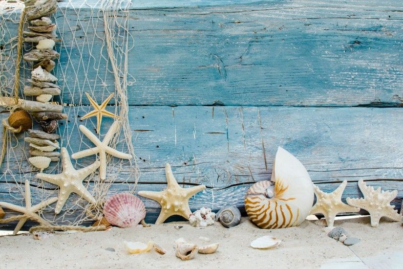 seashells starfishes beach sand marine wood shells star beach sand