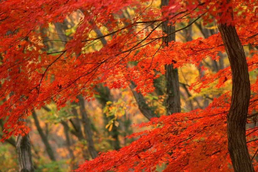 Beautiful Autumn Leaves Nature Wallpaper High Definition 11233 Wallpaper