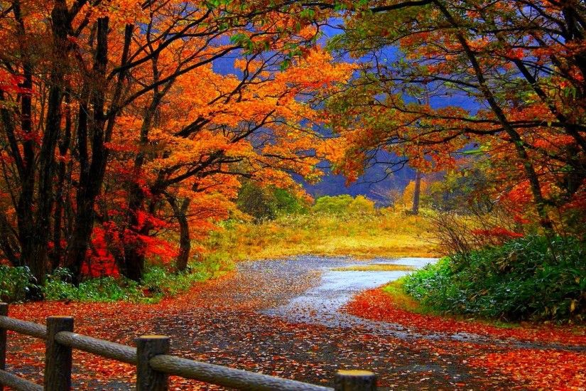Garden Design with AUTUMN fall landscape nature tree forest wallpaper with  How…