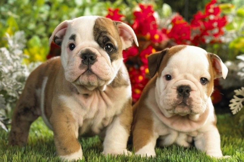 Preview wallpaper puppies, english bulldog, kids, couple 3840x2160