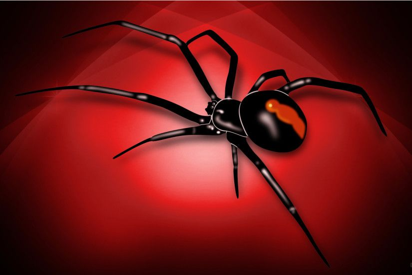 ... hd wallpaper with red white spider