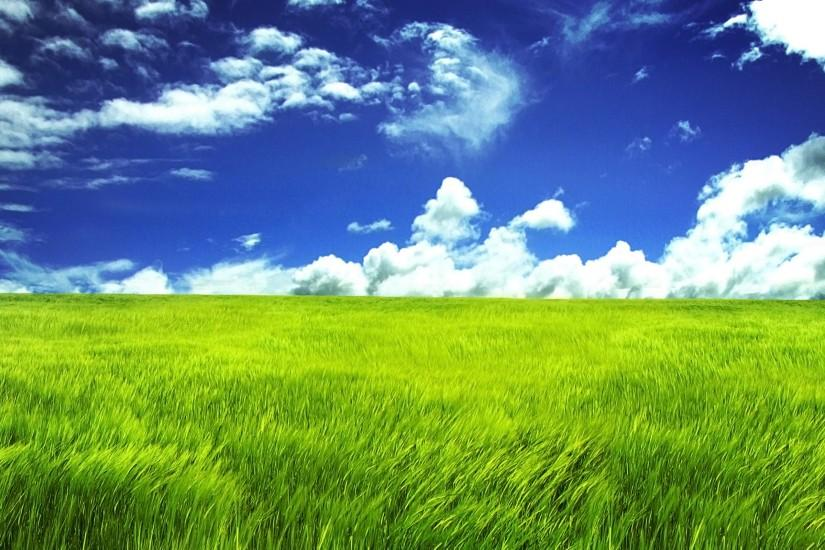 large grass wallpaper 2560x1600 download free
