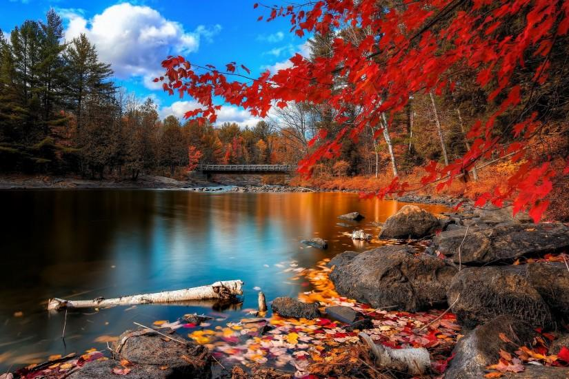 Autumn Forest Scenery Wallpapers Pictures Photos Images. Â«