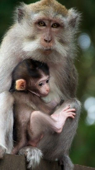 1440x2560 Wallpaper monkey, family, baby, care, tenderness