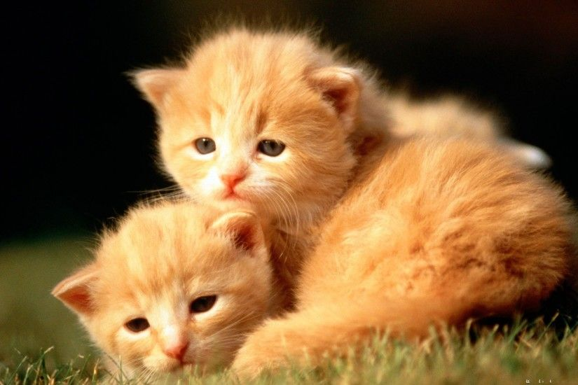 Cute Animal Wallpapers (66 Wallpapers)