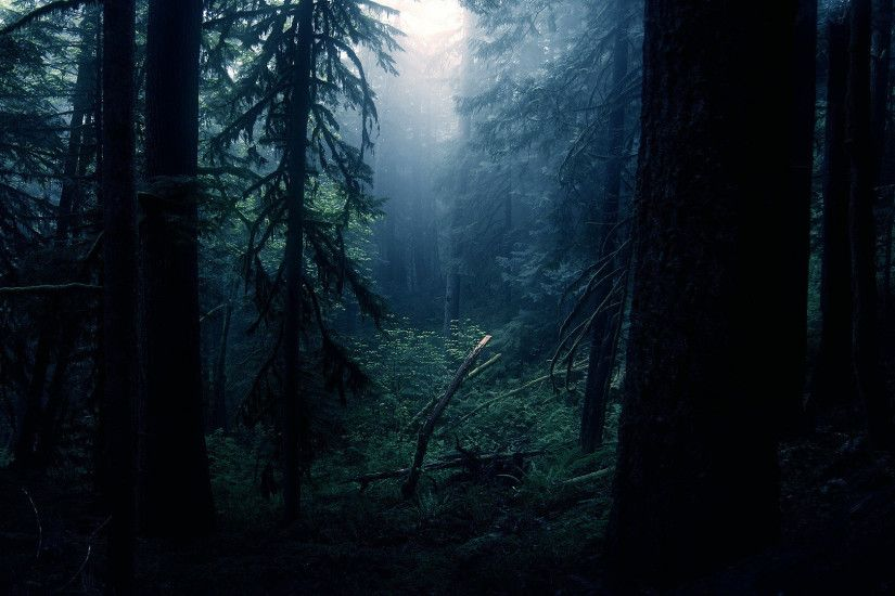 Dark Forest Wallpapers Images