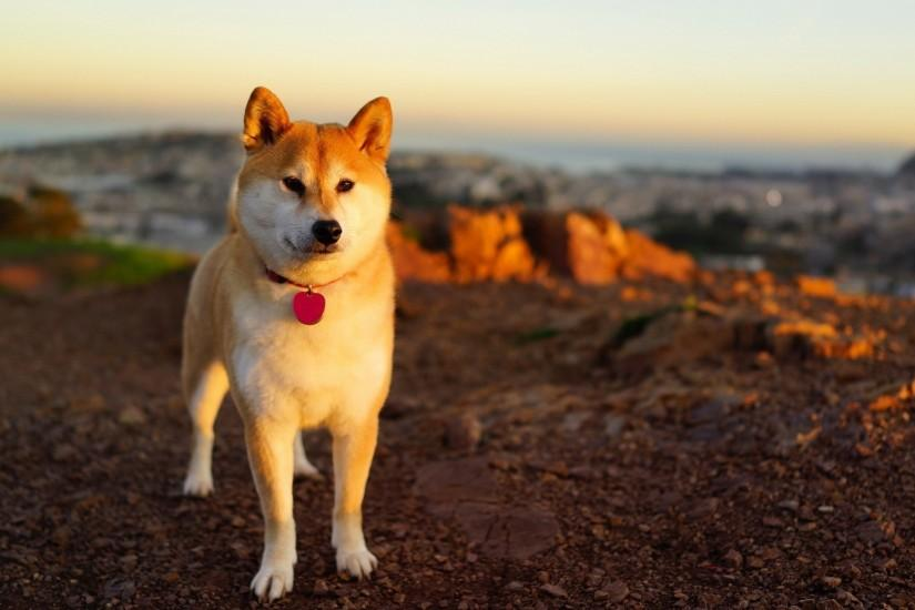 doge wallpaper 1920x1080 for pc