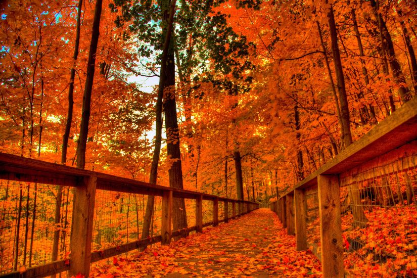 Orange · Fall Path · Leaves · Pumpkins ·  autum_trees_nature_landscape_leaf_leaves_2560x2048. local_offer Android  Wallpaper