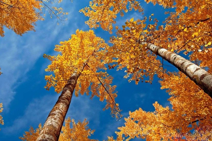 Free Desktop Wallpaper Autumn Image Gallery - HCPR ...