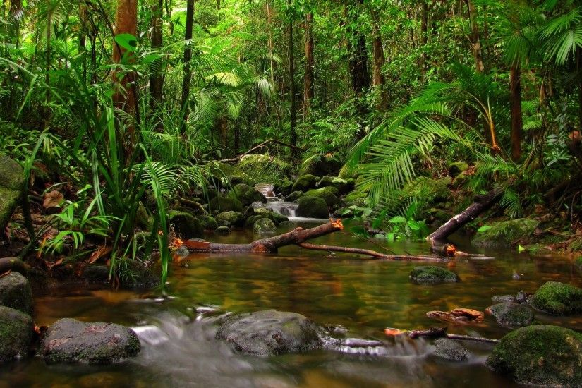Wallpapers For > Hd Rainforest Wallpaper