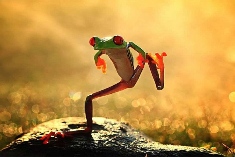 hd pics photos stunning funny crazy frog dancing attractive nature hd  quality desktop background wallpaper