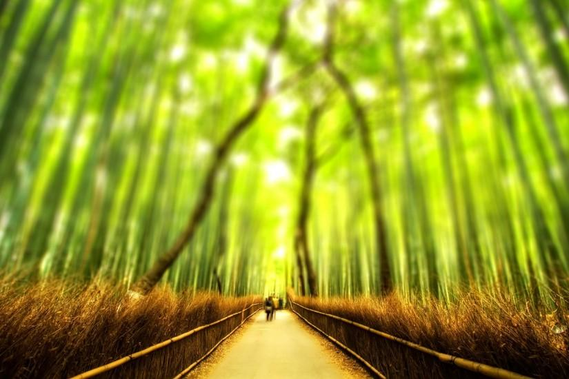 bamboo wallpaper 2560x1600 free download