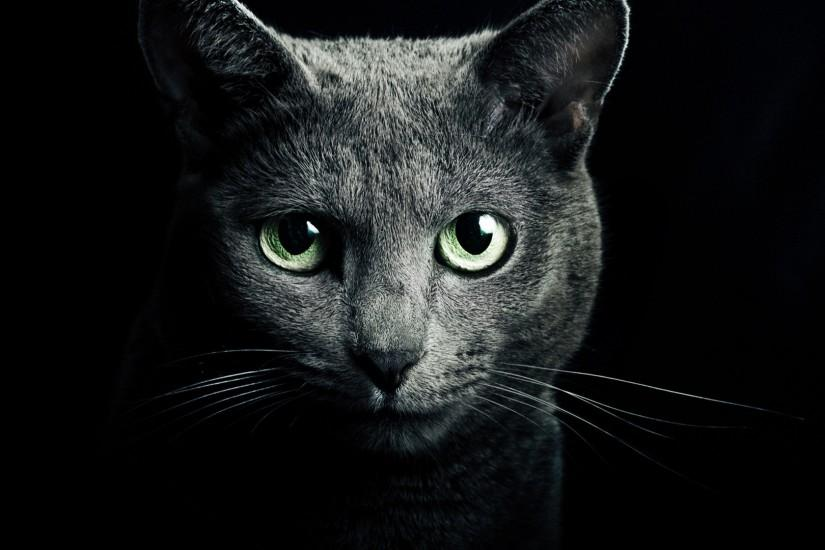 Black cat green eyes black background Wallpaper, Desktop Wallpapers .