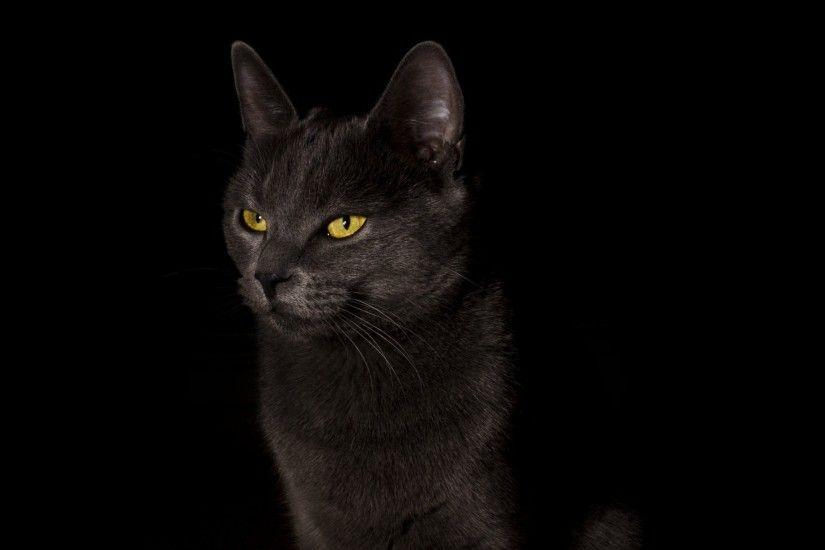 cat cat black background cat black background wallpaper widescreen full  screen widescreen hd wallpapers background wallpaper
