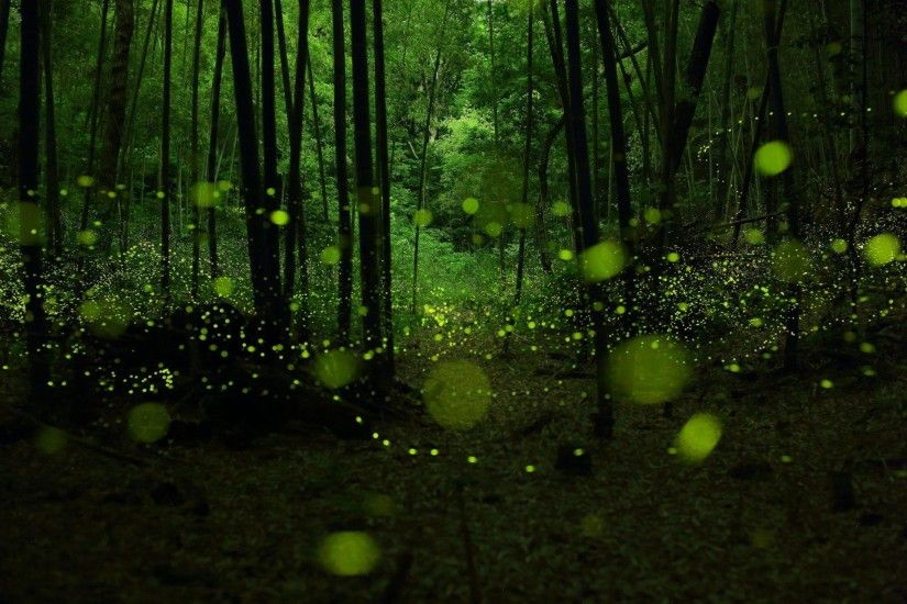 wallpaper.wiki-Pictures-forest-twilight-fireflies-bokeh-PIC-
