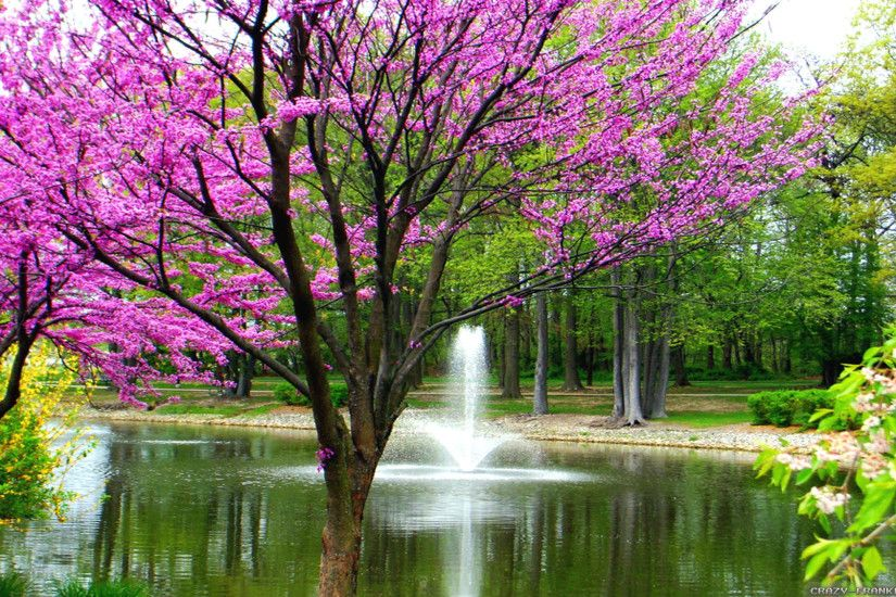 Beautiful spring wallpapers, Pictures, Images 50 Free Spring Wallpaper HD  for Desktop | Web Design Burn ...