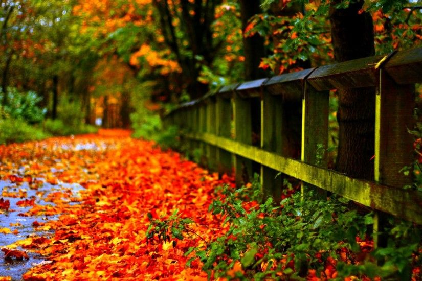 Autumn Leaves Wallpapers - HD Wallpapers Inn