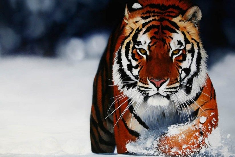 Tiger Wallpapers hd Tiger desktop wallpaper