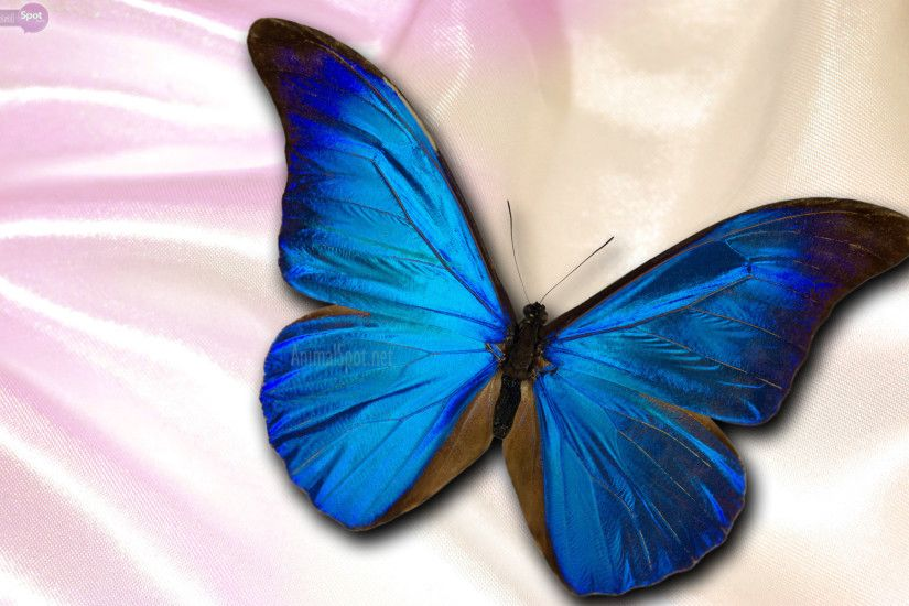 Best Butterfly Wallpapers and Backgrounds
