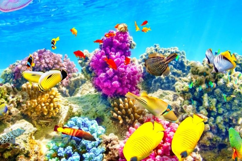 Underwater Tag - Sealife Underwater Fishes Nature Fish Sea Ocean Desktop Backgrounds  Tropical for HD 16