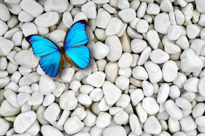 Images For > Blue Butterfly Desktop Wallpaper