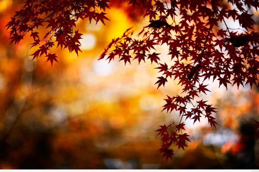 Leaves AUTUMN WALLPAPERS HD