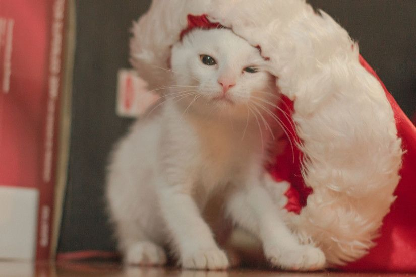 hd pics photos awesome christmas cat hd quality desktop background wallpaper
