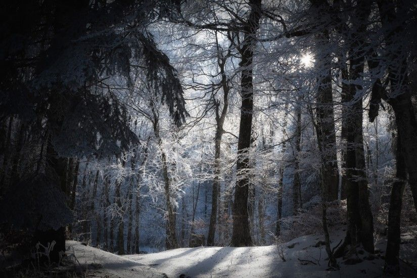 The sun's rays in a snowy forest wallpapers and images - wallpapers,  pictures, photos