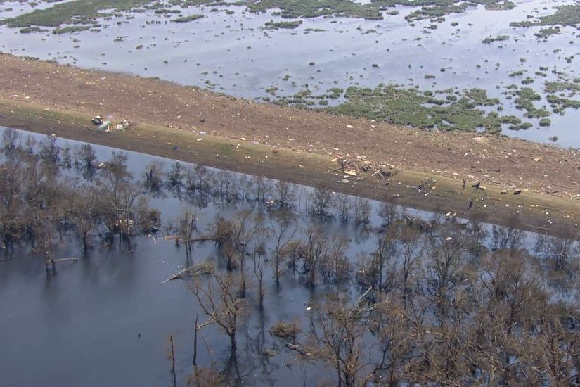 Miles of flooded and ruined farmland in New Orleans, Louisiana after Hurricane  Katrina. Cattle rest on the edge of a ridge, awaiting rescue.