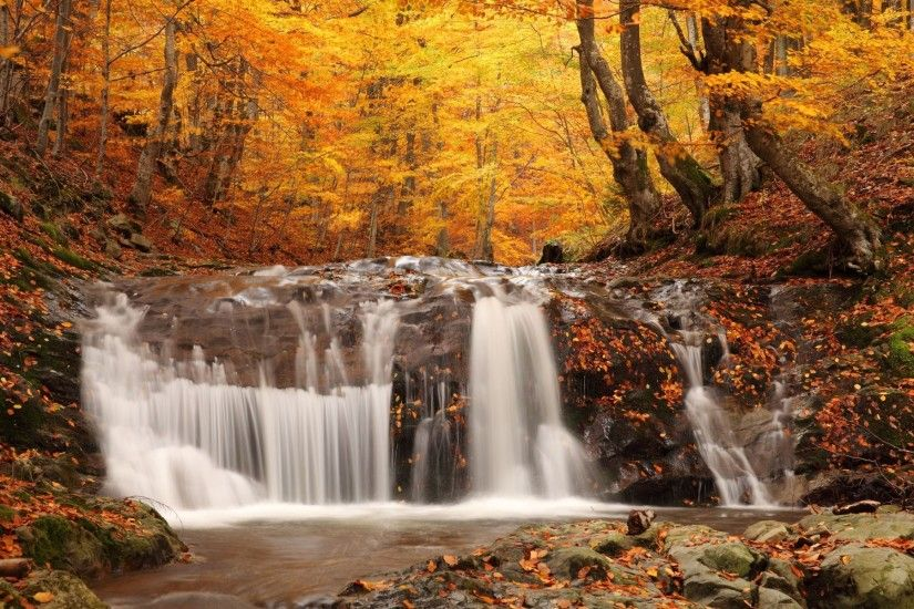 Forest Waterfall Wallpaper 34057