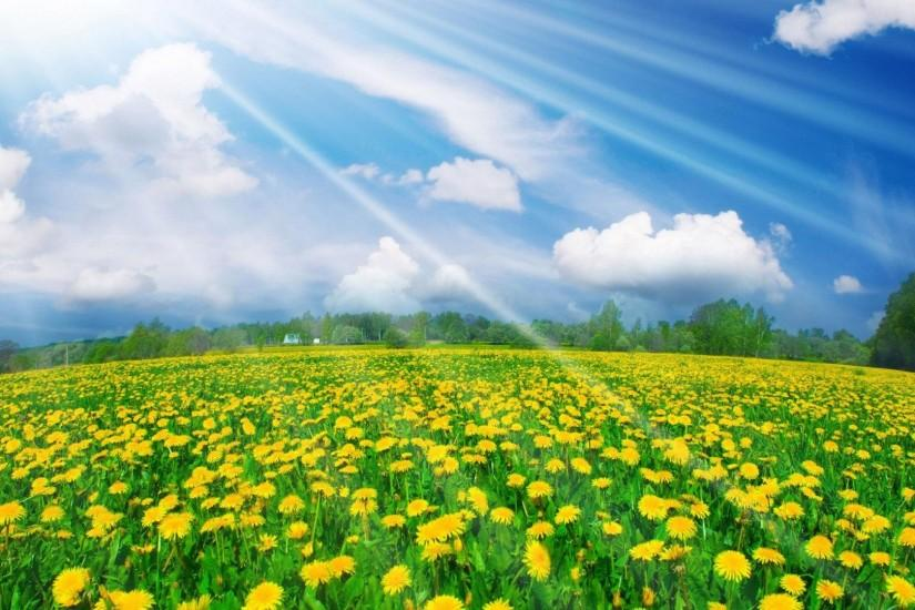 Spring Desktop Wallpaper Widescreen | Best Free Wallpaper