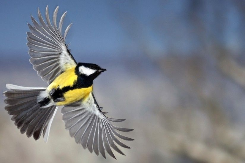 Sapporo Bird Wallpapers Free Download