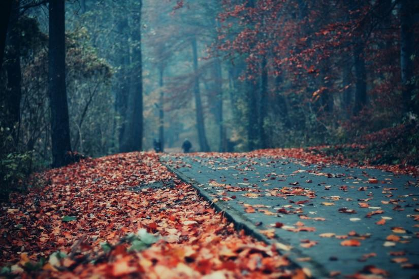 Autumn Tumblr Wallpapers Android With High Resolution Wallpaper On Nature Category Similar 1920x1080 Cute Fall