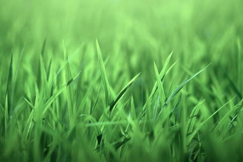 Green Grass wallpaper - 274270