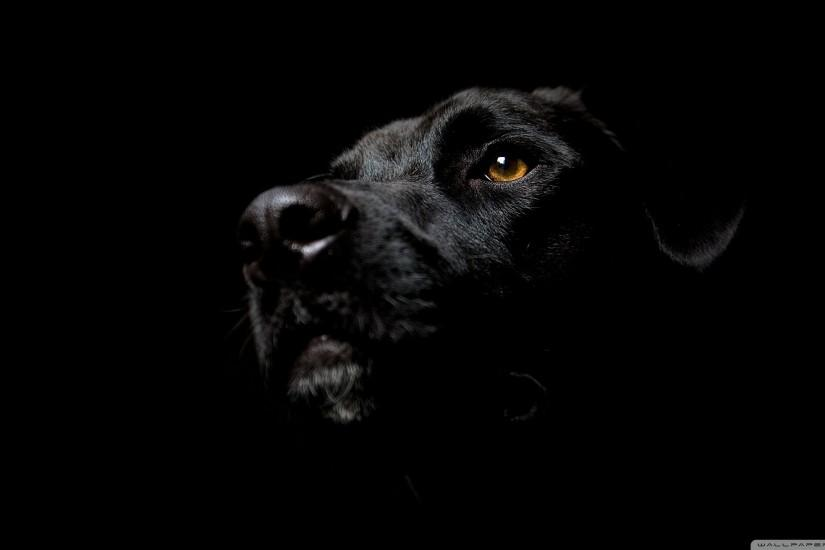 Black Dog Background Wallpaper