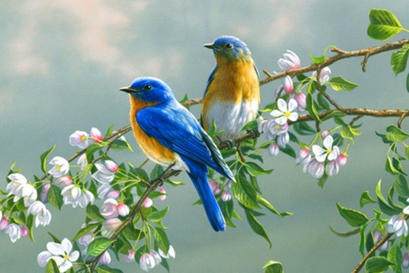 Bluebird HD Wallpaper | Hintergrund | 2560x1600 | ID:374936 - Wallpaper  Abyss