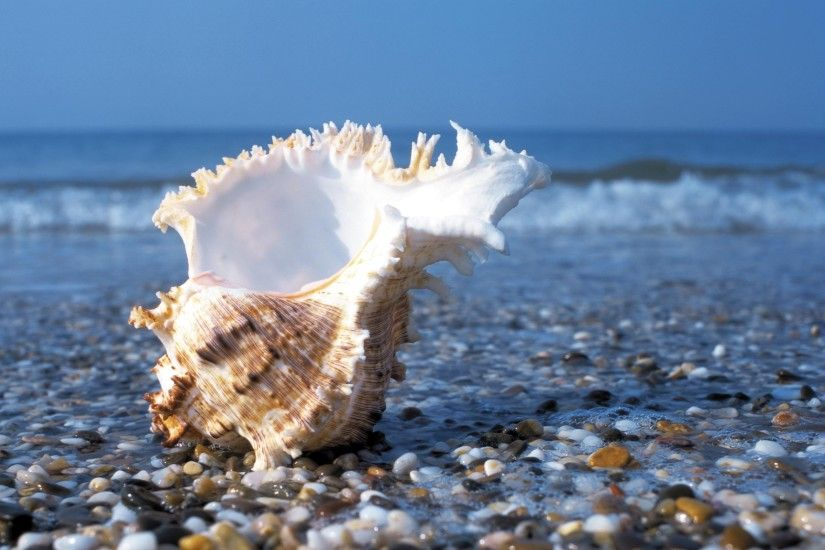 seashells wallpaper. Â«Â«