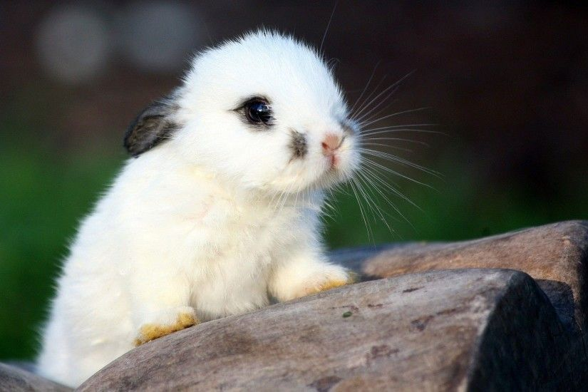 Adorable Baby Animal Pictures