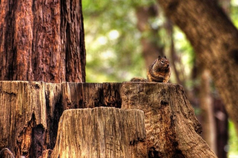 nature, squirrels, windows, hdr, big screen, woods, photography horror, 4k,  free, wildlife, forest, display,_1920x1200 Wallpaper HD
