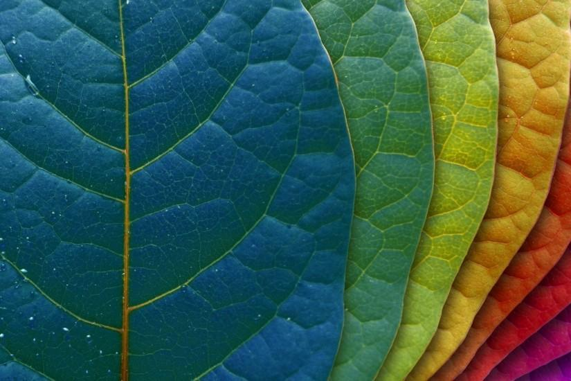 LEAF COLOUR