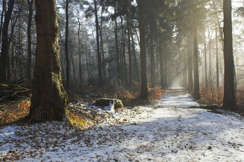 Nature landscapes trees forest roads path trail sunlight sunbeam fog haze  winter snow seasons wallpaper | 1920x1200 | 27465 | WallpaperUP