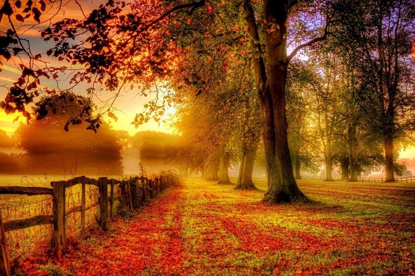 autumn scenery red leaves road fence Wallpaper, Desktop Wallpapers .