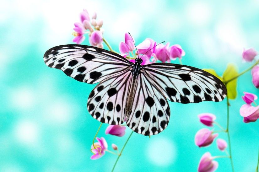 Butterfly Wallpapers Picture