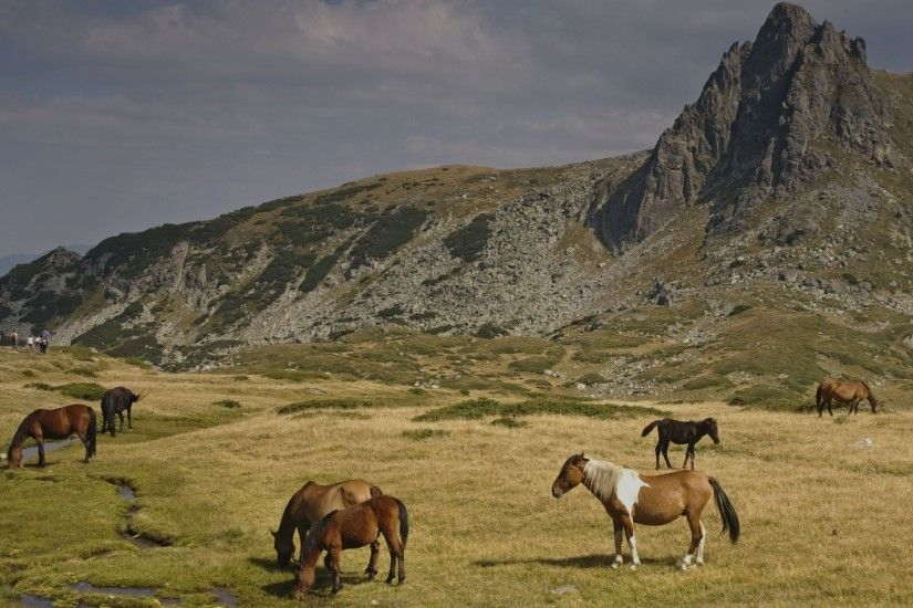 Horses Rila Mountains Bulgaria wallpapers and stock photos