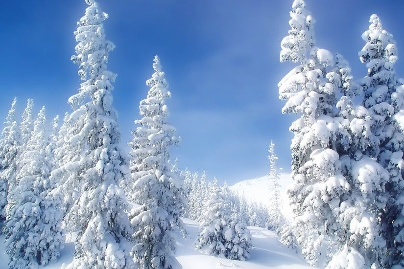 Winter Wonderland Wallpaper Winter Nature Wallpapers