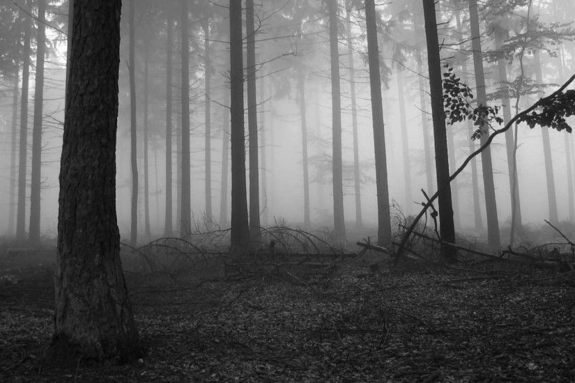 ... 24 Forest HD Wallpapers Backgrounds Wallpaper Abyss | Black Forest .
