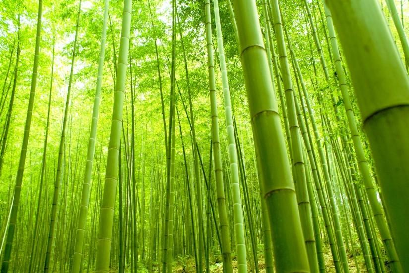 best bamboo background 1920x1080 for hd 1080p