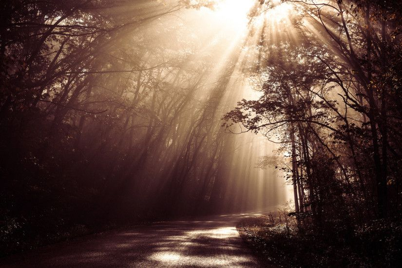 Sunlight Sepia Road Forest Trees beams rays woods sunrise landscapes  filtered wallpaper | 1920x1200 | 40772 | WallpaperUP