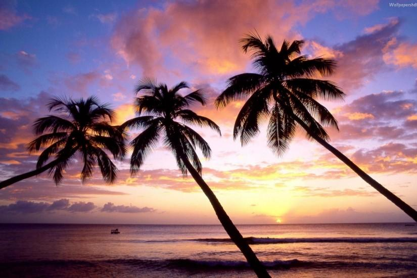 Palm Trees On The Beach 17337 Hd Wallpapers in Beach n Tropical .